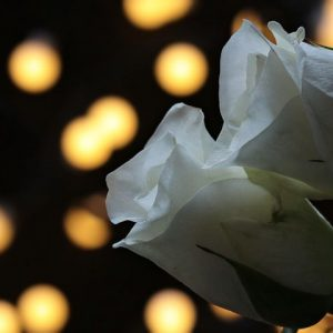 geburtstag abmahnung umtauschbetrug bewerbung floristin - Bewerbung Floristin